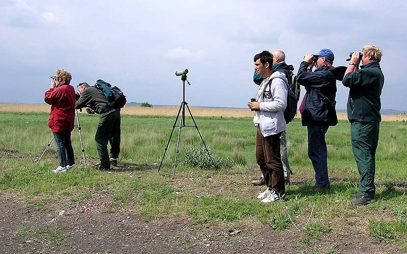'Via Pontica' Autumn Migration Birding (Bulgaria)