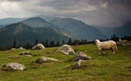 Trekking in Carpathian Mountains Poland with Penguin Travel