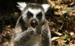 Генерален спонсор на Мадагаскар 2