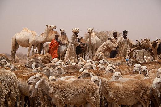 Судан - гарантирана група на 5 декември 2014