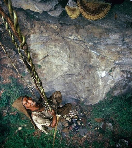 Гурунгите  - ловците на див мед