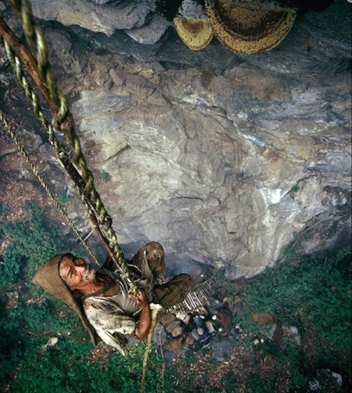 Gurung  - the honey hunters