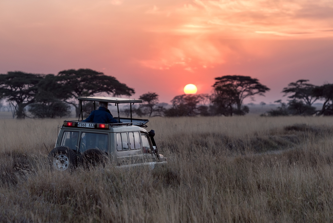 African Safaris: the what, when and where