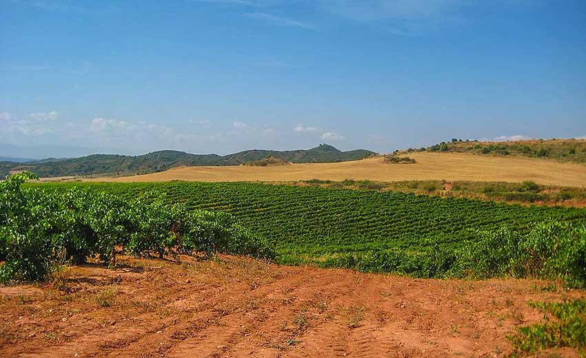 Camino de Santiago French Way - Part 2 Pamplona to Logrono