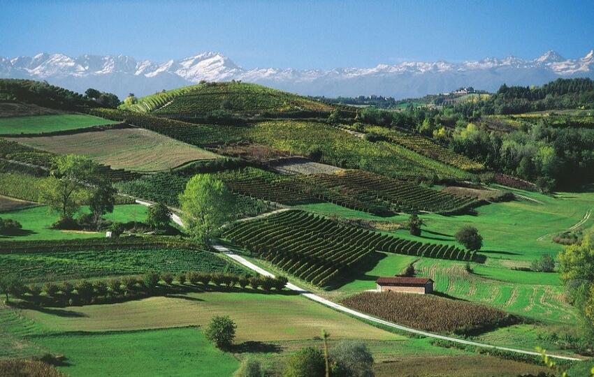 Walking tour in Langhe Wine Region - Piemonte, Italy