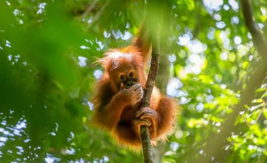 Deep inside the jungle of Sumatra