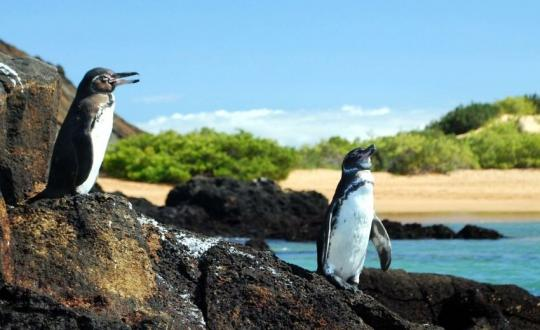 Ecuador And The Galapagos Islands - A Tour Back To Nature